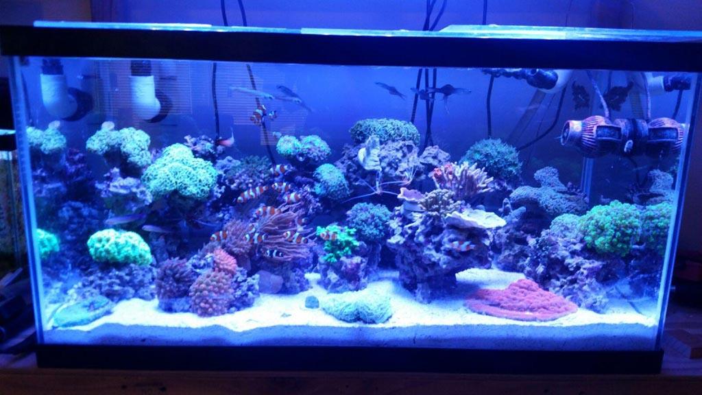 Aquariums Photo Gallery Aqua Blue Aquarium Solutions