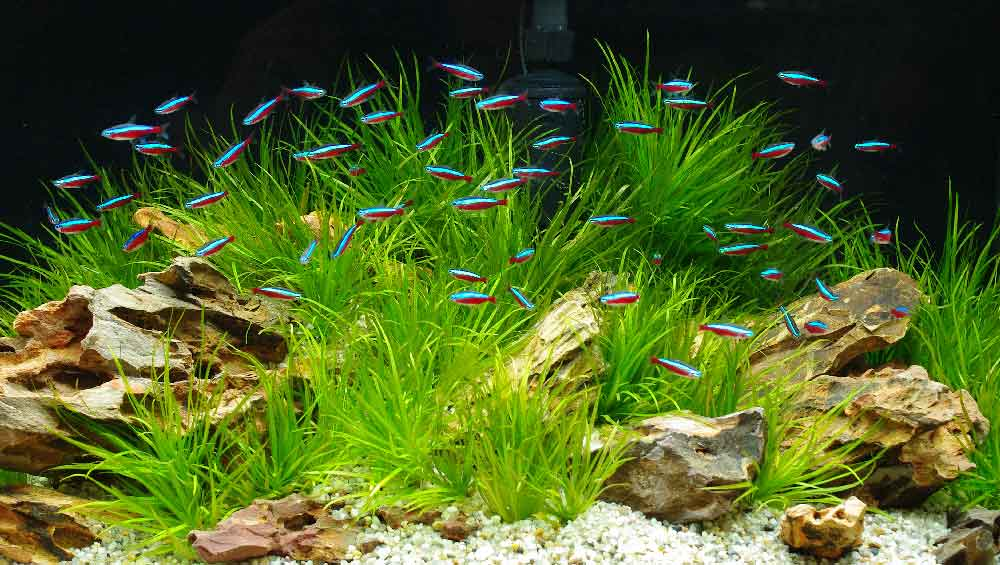 Wide selection of aquarium products