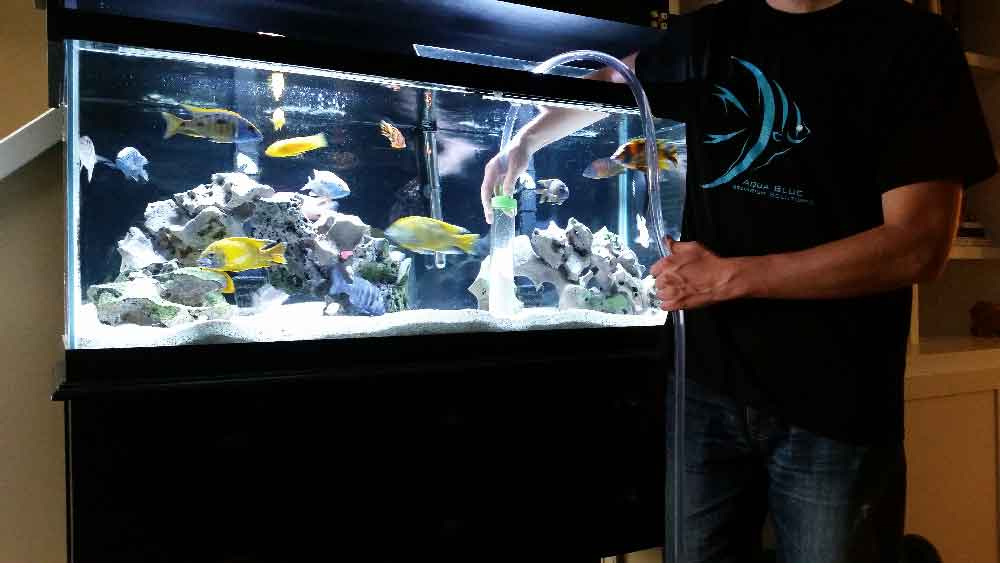 Scheduled aquarium maintenance