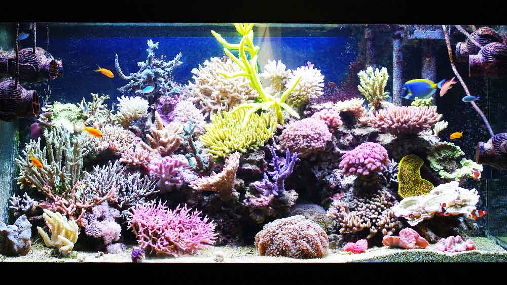 Aqua Blue Aquarium Solutions - for all your aquarium needs