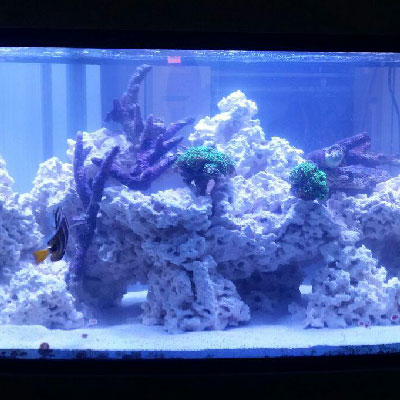Custom designed acrylic aquariums
